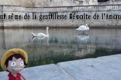pensee-2015_08_31-08-29-00-Laurent-0141